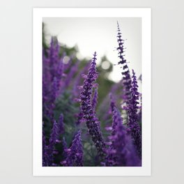 Long Purple Flowers Art Print