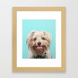 Adorable Yorkie Painting, Yorkshire Terrier Portrait, Smiling Yorkie Art Framed Art Print