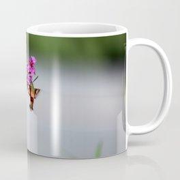 Hummingbird Sphinx Moth in Phlox Coffee Mug