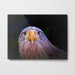 Eagle, The Look Metal Print