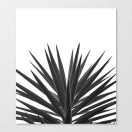 Succulent Photographic Print Canvas Print