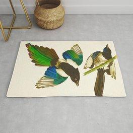 Magpie Vintage Scientific Bird Illustration Rug