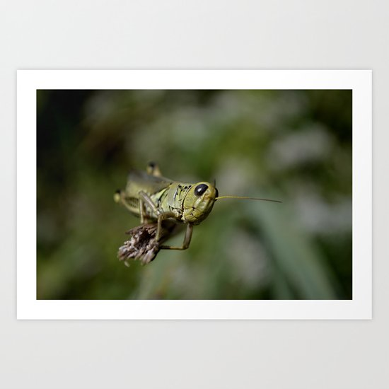 Grasshopper close up Art Print