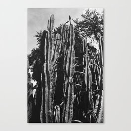 Angry Cactus Canvas Print