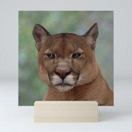 Mountain Lion Mini Art Print