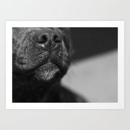 Poppy Nose Art Print