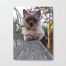 Freya Kitty Metal Print