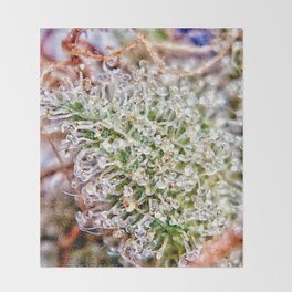 Skywalker OG Kush Strain Frosty Buds Calyxes Trichomes Close Up View Throw Blanket