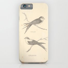 Vintage Print - Companion to Gould's Birds of Australia (1877) - Swallows: Welcome / White-Breasted iPhone Case