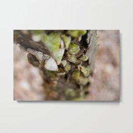 Fungus in Springtime Metal Print
