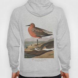 Red breasted sandpipe, Birds of America, Audubon Plate 315 Hoody