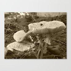 mushrooms 2016 X Canvas Print