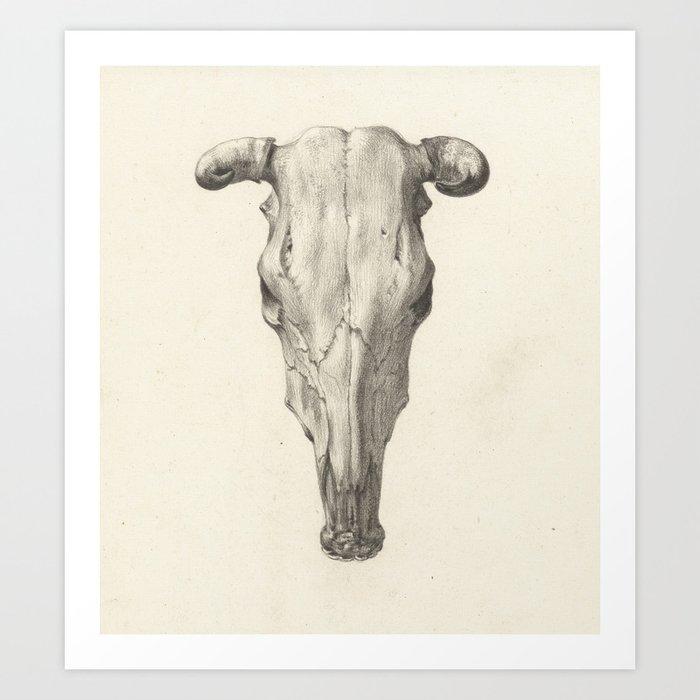Cow Skull Drawing Art Print By Fineearthprints