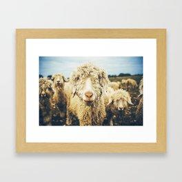 Curly I Framed Art Print