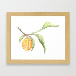 kumquat Framed Art Print