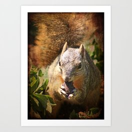 Autumn Squirrel at Lunch Art Print