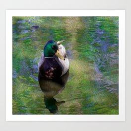 Duck on shimmering water Art Print