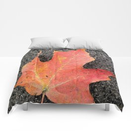 Water color of a sugar maple leaf Comforters
