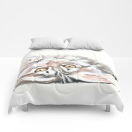 Cute Maine Coon Kitten Playing Comforters