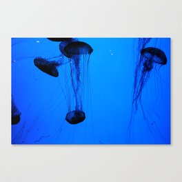 Jelly Fishies Canvas Print