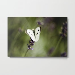 Butterfly Dream 1 Metal Print