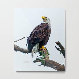 Bemidji Eagle I Metal Print
