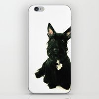 chelsea iPhone & iPod Skins featuring Chelsea by Zayda Barros