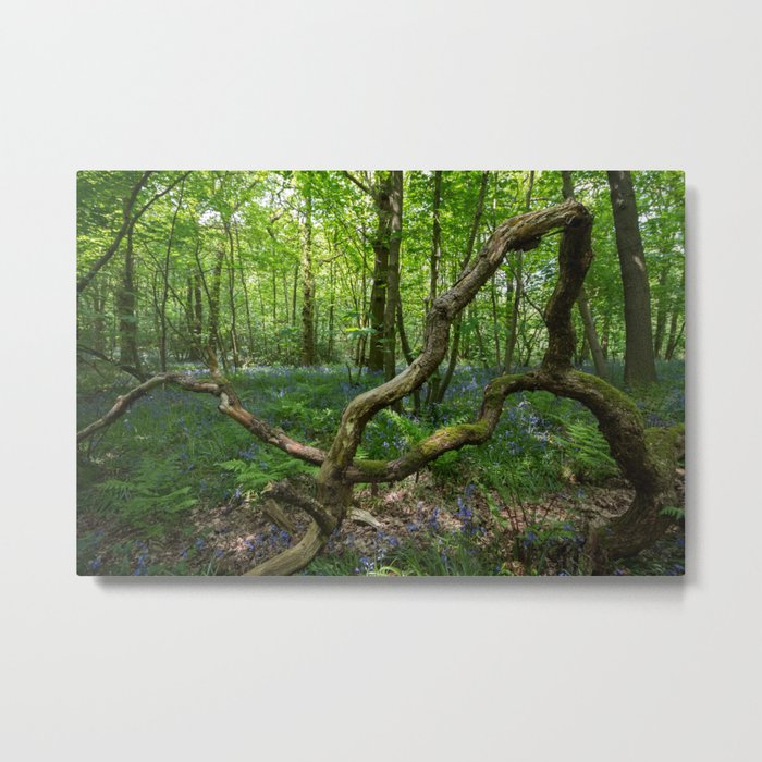 glorious bluebell woodland Metal Print