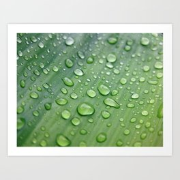 Leaf with rain droplets Art Print