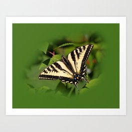 Western Tiger Swallowtail in the Garden Art Print
