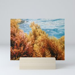 Forest of Seaweed, Seaweed Underwater, Seaweed Shallow Water near surface Mini Art Print