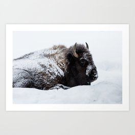 One cold bison Art Print