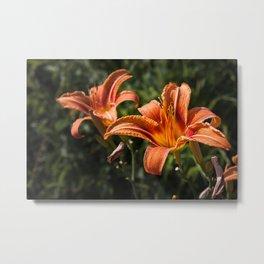 Orange Yellow Fire Lily Metal Print