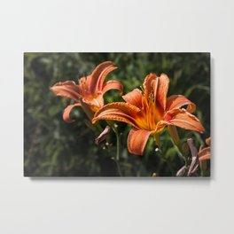 Orange Yellow Fire Lily Flower Metal Print
