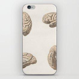 Brain anatomy iPhone Skin