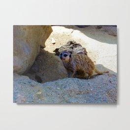 Meerkat at the Zoo Metal Print