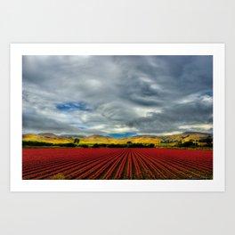 Marigold Field Art Print