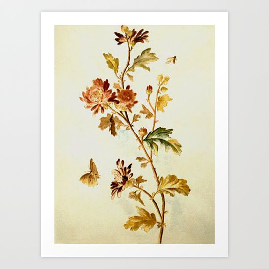 Chrysantheme Art Print