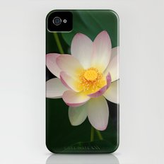Lotus Blossom in Full Bloom Slim Case iPhone (4, 4s)