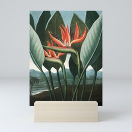 The Queen - The Temple of Flora Botanical Print Mini Art Print