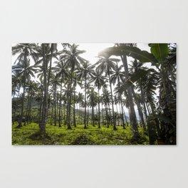 Buko (Coconut) Trees Canvas Print