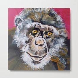 Toby, the Chimpanzee (1978-) Metal Print