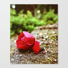 Peaceful rose Canvas Print