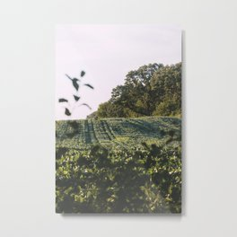 Midwest Summers, IV Metal Print
