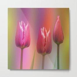Spring time elegance (tulips) Metal Print