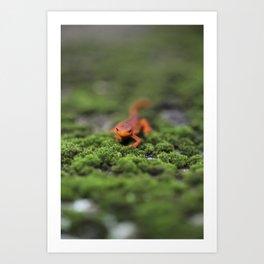 Coming For You - Orange Salamander Art Print