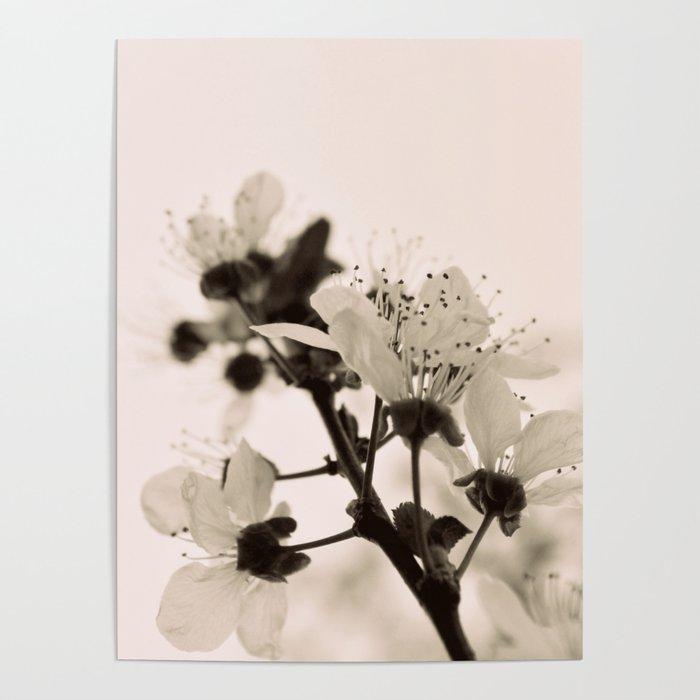 Blossoms Monochrome Poster