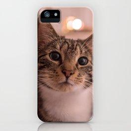 A relaxing kitty / kitten iPhone Case