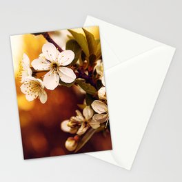 Apple Blossoms Evening Stationery Cards
