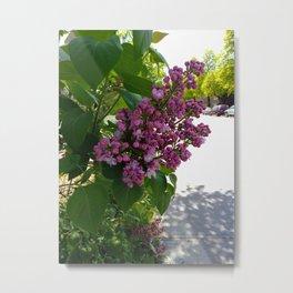 Purple Lilac Metal Print